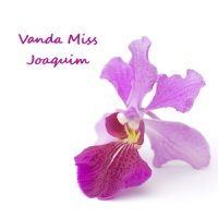 Singapore National Flower Miss Vanda Joaquim by Eldred Lim / shutterstock.com