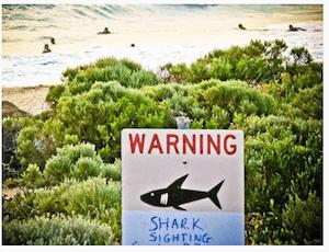 shark warning sign dpa