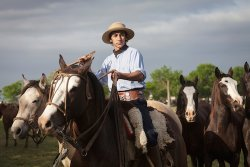 Argentina Gaucho on Horse - image by Ed Singer/Shutterstock.com