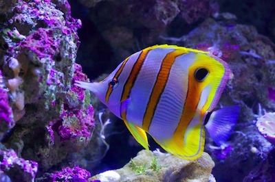 Ocean facts for kids atlantic ocean pacific ocean and for Fish facts for kids