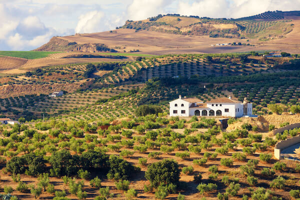 Olive farm near Cadiz in Andalusia/Spain