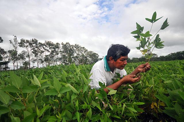 Soy bean plantation in Bolivia - image from Neil Palmer/wikimedia