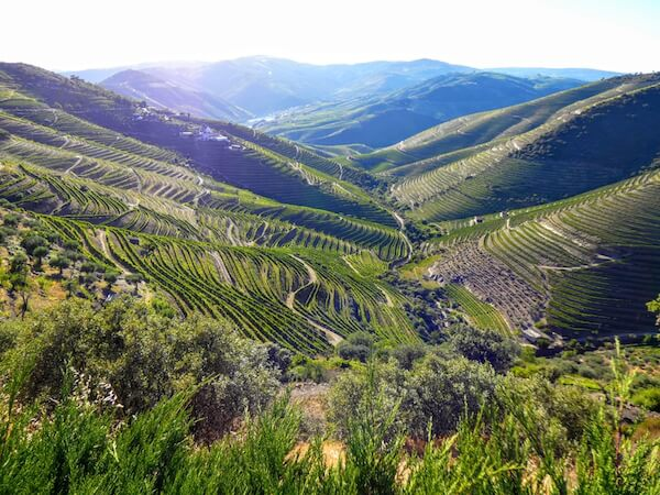 Vineyards in the Douro Valley