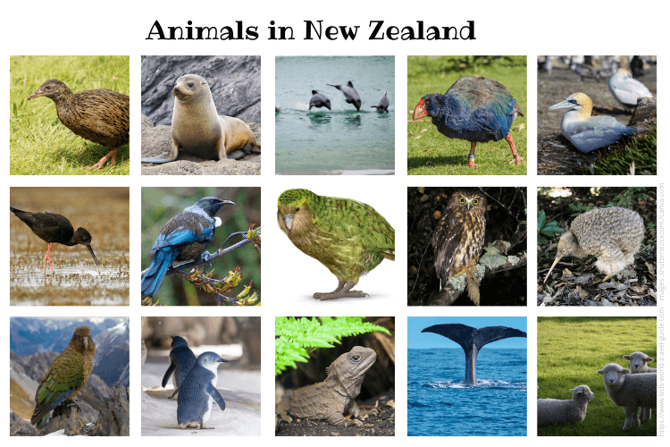 Animals in New Zealand collage - Kids World Travel Guide - images by shutterstock.com