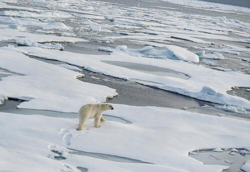 Arctic Ocean ice packs with polar bear