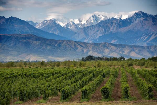 Mendoza Wine Valley in Argentina