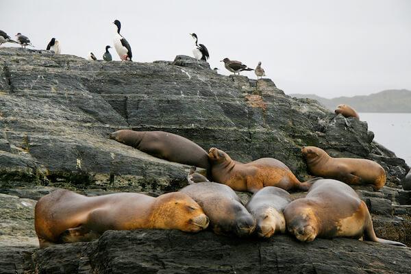Seals and cormorants in Tierra del Fuego