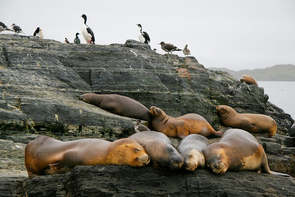 Seals and cormorants in Tierra del Fuego