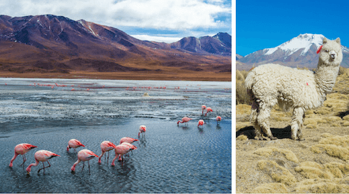 Bolivia Facts For Kids Geography Attractions People Animals Food