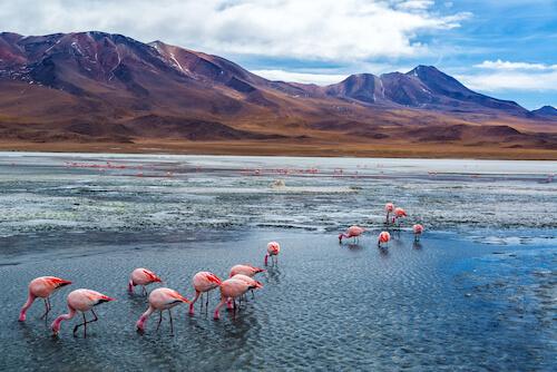 Pink flamingoes in Bolivia's Salar de Uyuni