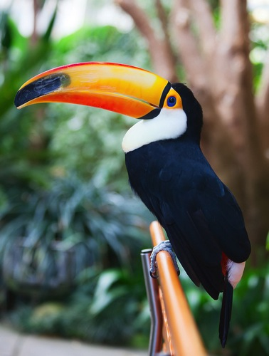 Fun Facts Of Rainforest For Kids
