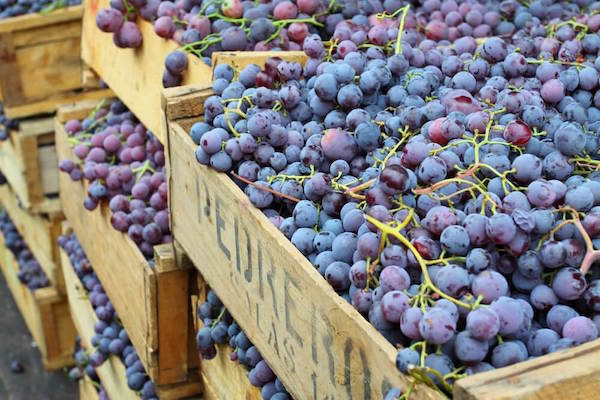 Grapes from Chile - one of the main export products of the South American country.