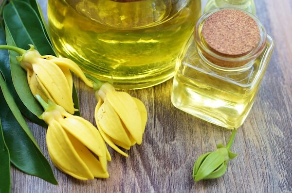 Ylang ylang flowers and essence