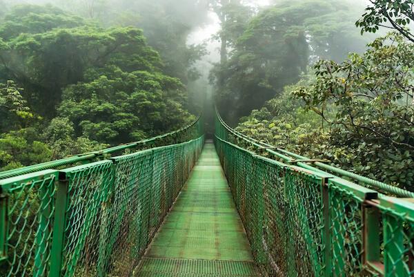Costa Rica Hanging Bridge in Monteverde Cloud Forest
