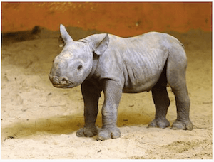 Baby rhino born in Estonia - dpa