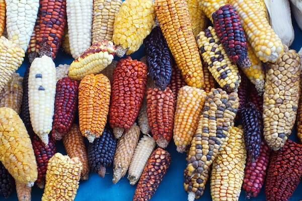 Multicolour corn