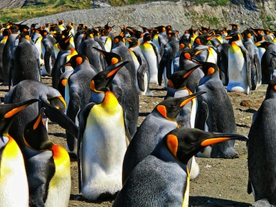 Emperor Penguins by mgsiv