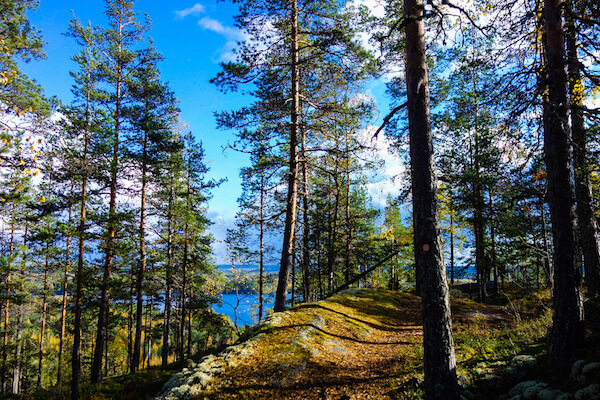 Forest in Finland - image by Tonis Valing