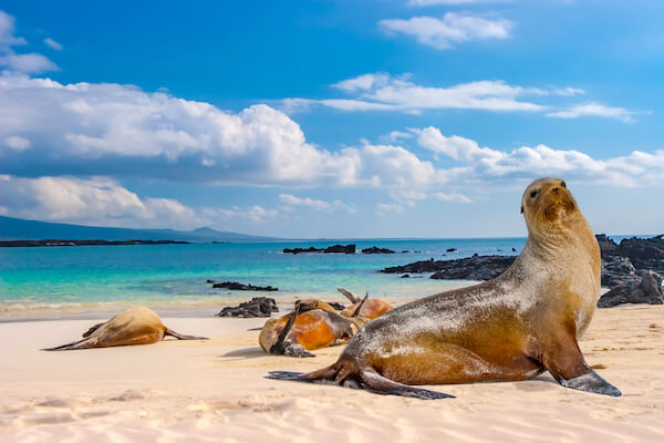 Seals on a beach in the Galapagos islands