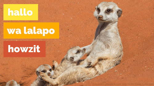 Namibia Meerkats by Ecoprint/Shutterstock - how to say hello in Namibia - Kids World Travel Guide.com