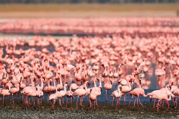 Flamingoes at Lake Turkana