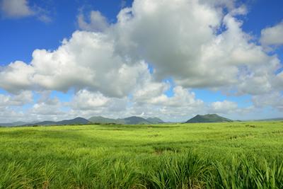 Sugarcane field in Mauritius
