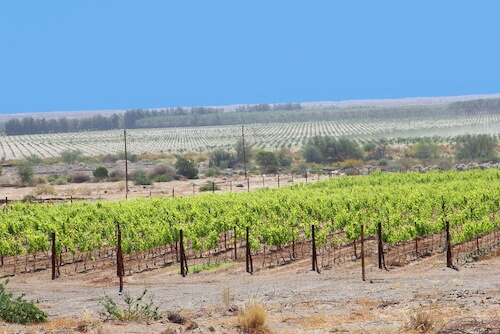 Namibian vineyards - shutterstock