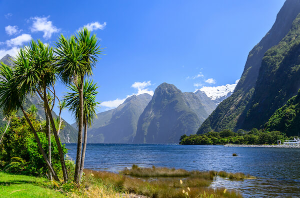 New Zealand Milford Sound with palm trees