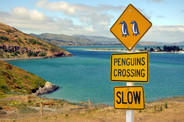 New Zealand Otago penguin sign - image by shutter stock.com