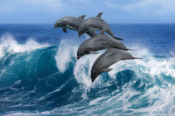 Dolphins frolicking in the world's biggest ocean, the Pacific Ocean