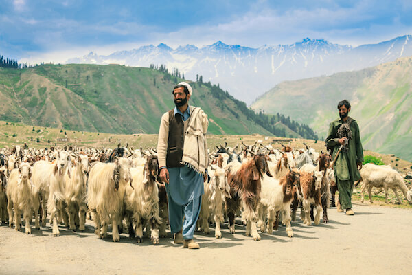 Goat herders - image by Dave Primov/shutterstock
