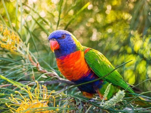 Animals In Australia Australian Animals You Should Know