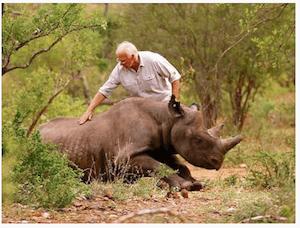 Rhino in Rwanda