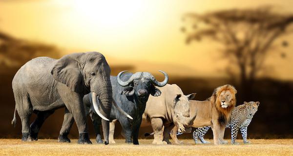 South Africa's Big Five: elephant, buffalo, rhino, lion, leopard