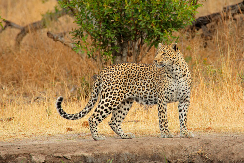 South Africa Animals | Wildlife | Big Five | Animals in South Africa