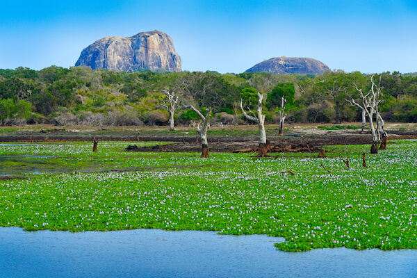 Yala National Park in Sri Lanka