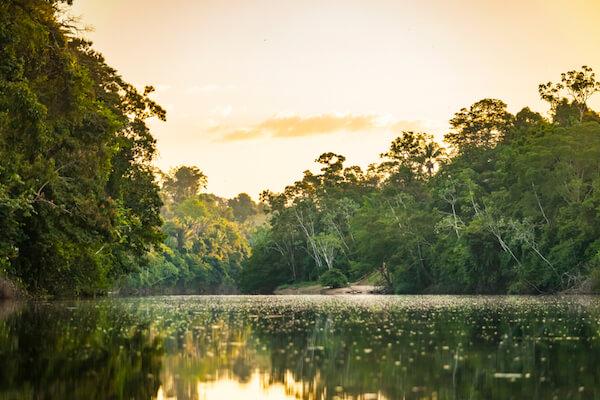 Suriname riverscape