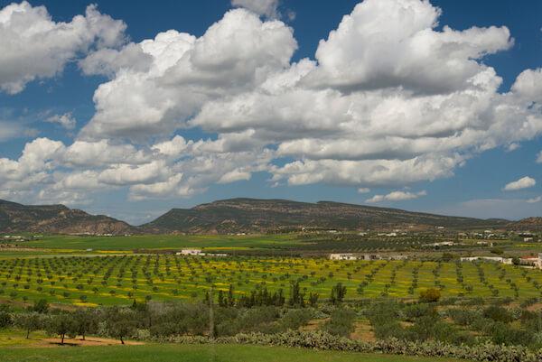 Olive plantations in Tunisia