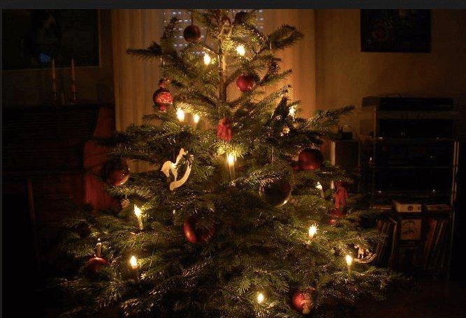 Real German Christmas Tree