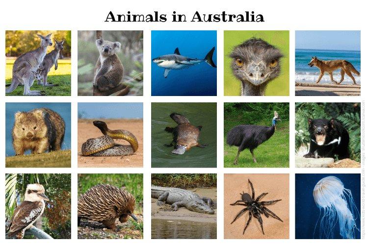 Animals in Australia: 15 Australian animals you should know