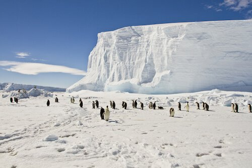 Antarctica ice with penguins and clear blue sky