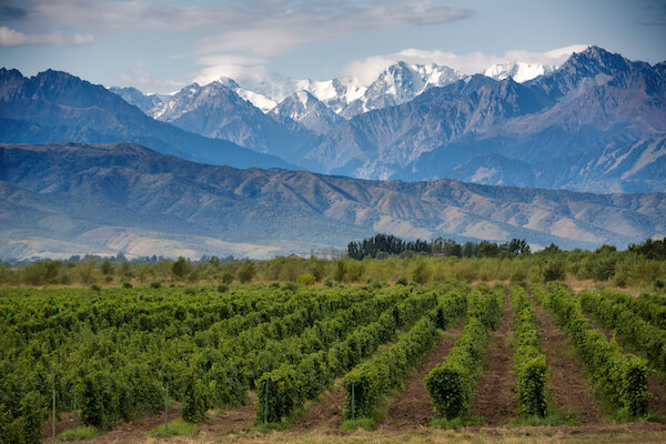 Mendoza Wine Valley in Argentina