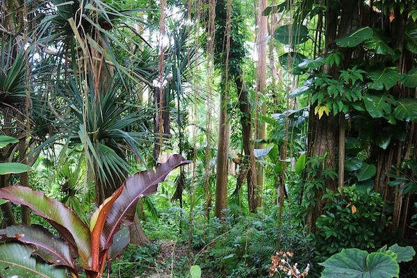 Rainforest in Barbados
