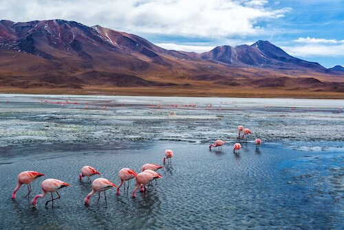 Pink flamingoes in Bolivia's Salar de Uyuni