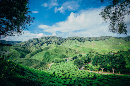 Malaysia Cameron Highlands - image by Barkeh Said/shutterstock.com
