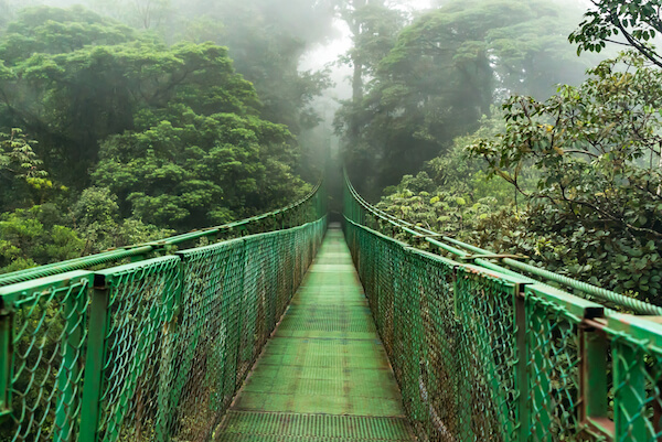 Costa Rica Hanging Bridge in Monteverde Cloud Forest