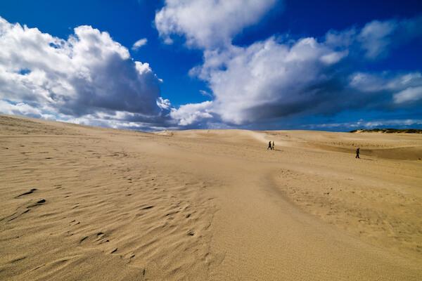 Rabjerg dunes near Skagen in Denmark