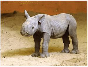 Baby rhino born in Estonia - dpa
