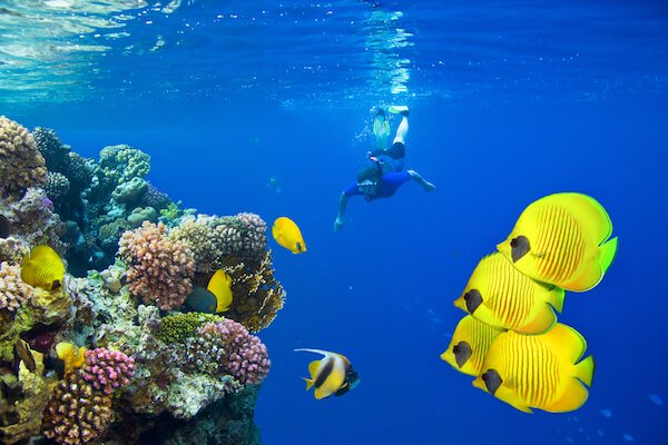 Diver in Egypt's Red Sea