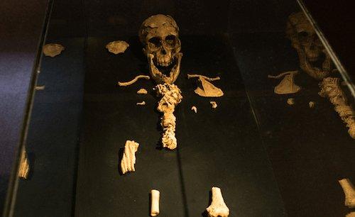 Dinkinesh fossil